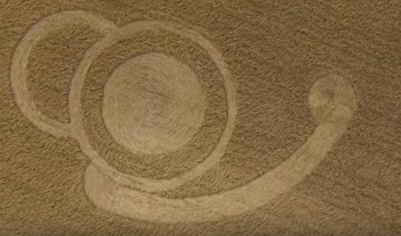 UN NUEVO AGROGRAMA APARECE EN UN CAMPO DE MALABRIGO