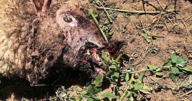 LA MUTILACIÓN DE ANIMALES VOLVIÓ A LA PAMPA